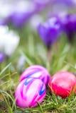 Fondo delle uova di Pasqua e dei fiori Immagini Stock Libere da Diritti
