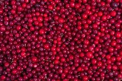 Fondo delle uve di monte Immagini Stock