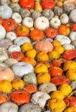 Fondo delle zucche variopinte rotonde Fotografie Stock