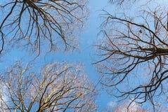 Fondo desnudo de las ramas Fotografía de archivo