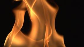 Fondo detallado Hd lleno del fuego almacen de metraje de vídeo