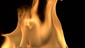 Fondo detallado Hd lleno del fuego almacen de video