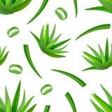 Fondo detallado realista de Vera Green Plant Seamless Pattern del áloe Vector Fotos de archivo libres de regalías