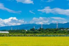 Fondo di agricoltura del giacimento del riso Campagna matura del raccolto del riso Immagini Stock