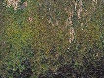 Fondo di alta risoluzione dei licheni sporchi sulla parete Fotografia Stock