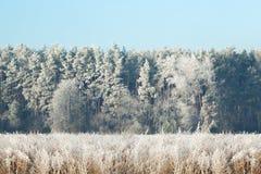 Fondo di alta risoluzione del wallaper nevoso di inverno della foresta Immagini Stock Libere da Diritti