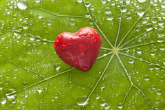 Fondo di amore del cuore della foglia fotografie stock