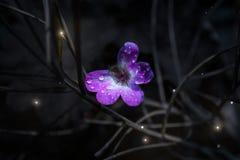 Fondo di Art Abstract Spring Floral, progettazione Porpora, fiore Bandiera di Web Bella carta da parati della natura naughty Vari immagine stock