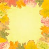 Fondo 013 di autunno Fotografia Stock