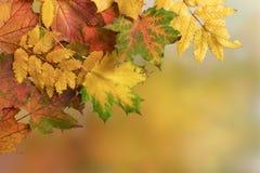 Fondo di autunno Immagini Stock Libere da Diritti