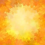 Fondo di autunno con la struttura delle foglie di acero Immagine Stock