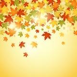 Fondo di autunno con le foglie Fotografie Stock Libere da Diritti