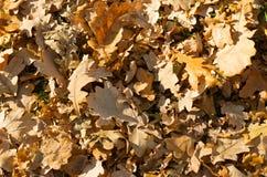Fondo di autunno con le foglie Fotografia Stock