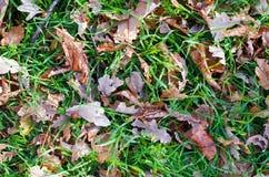 Fondo di autunno con le foglie Immagini Stock