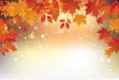 Fondo di autunno con le foglie cadenti rosse Fotografia Stock Libera da Diritti