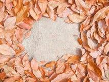Fondo di autunno con le foglie di gomma asciutte Saluto di stagione Immagine Stock