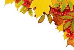 Fondo di autunno con le foglie secche in un angolo Immagine Stock Libera da Diritti