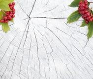 Fondo di autunno con tavolato e le bacche del viburno Immagine Stock