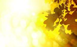 Fondo di autunno di Art Beautiful con le foglie della quercia immagine stock libera da diritti