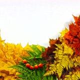 Fondo di autunno, elementi delle foglie di acero, Immagini Stock