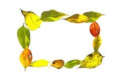 Fondo di autunno fatto dalle foglie del chokeberry e di Jerusal Fotografia Stock