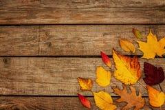 Fondo di autunno - foglie a forma di differenti su legno Fotografie Stock