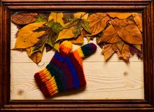 Fondo di autunno, legno e foglie cadute e guanto tricottato L'acero e la foglia secca quercia mettono sul fondo di legno naturale fotografia stock