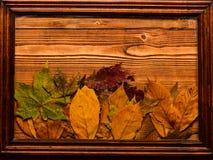 Fondo di autunno, legno e foglie cadute, spazio della copia L'acero e la foglia secca quercia mettono sul fondo di legno naturale immagine stock