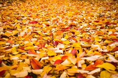 Fondo di autunno - variopinto Fotografie Stock