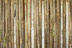 Fondo di bambù Immagine Stock