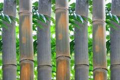 Fondo di bambù strutturato fotografia stock