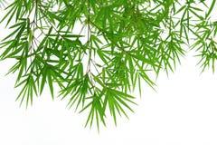 Fondo di bambù verde della foglia Immagine Stock Libera da Diritti
