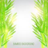 Fondo di bambù dell'acquerello di vettore con verde Fotografia Stock Libera da Diritti
