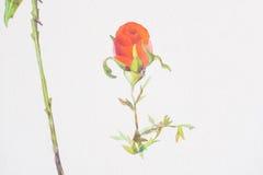 Fondo di bianco del biglietto di S. Valentino di amore delle rose rosse Fotografie Stock Libere da Diritti