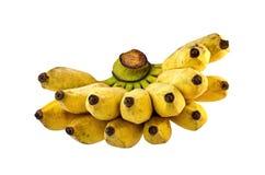 Fondo di bianco dell'isolato della banana di Pisang Awak Immagine Stock