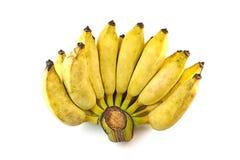 Fondo di bianco dell'isolato della banana di Pisang Awak Fotografia Stock Libera da Diritti