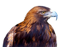 Fondo di bianco di Eagle Immagine Stock Libera da Diritti