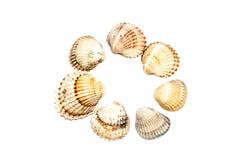 Fondo di bianco di Shell Circle On del mare Immagine Stock Libera da Diritti