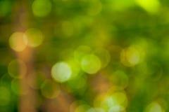 Fondo di Bokeh con la tonalità verde Fotografia Stock Libera da Diritti