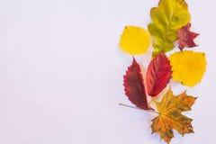 Fondo di caduta con le foglie variopinte stagionali su fondo bianco Accumulazione dei fogli di autunno Insieme delle foglie autun Fotografia Stock