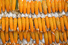 Fondo di cereale Immagini Stock