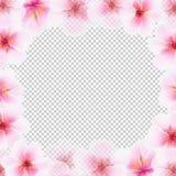 Fondo di Cherry Flower Frame With Transparent Immagine Stock Libera da Diritti