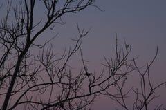 Fondo di colore dei rami di albero Fotografie Stock Libere da Diritti