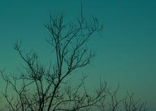 Fondo di colore dei rami di albero Immagine Stock