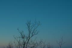 Fondo di colore dei rami di albero Fotografia Stock Libera da Diritti
