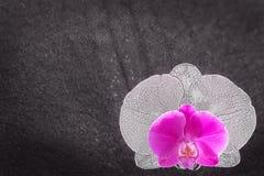 Fondo di compassione grigio chiaro con il fiore dell'orchidea e lo spac della copia fotografia stock