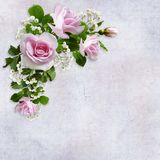 Fondo di congratulazioni con un bello mazzo delle rose rosa su un fondo d'annata Fotografia Stock Libera da Diritti