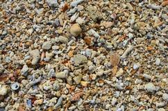 Fondo di corallo asciutto Fotografia Stock Libera da Diritti