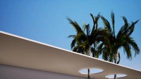 Fondo di due un grande palme il cielo soleggiato blu stock footage