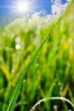 Fondo di Eco con il Sun ed il cielo, erba, gocce di acqua Fotografia Stock Libera da Diritti